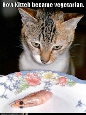 How Kitteh became vegetarian.
