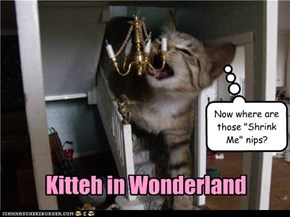 Kitteh in Wonderland