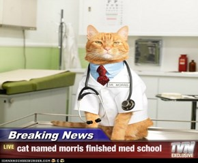 Breaking News - cat named morris finished med school