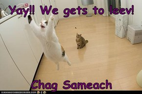 Yay!! We gets to leev!   Chag Sameach