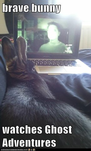 brave bunny  watches Ghost Adventures