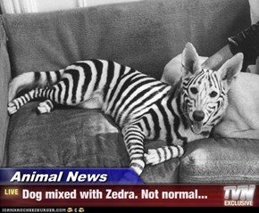 Animal News - Dog mixed with Zedra. Not normal...