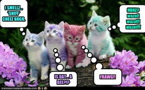 colur kittehz in da natures