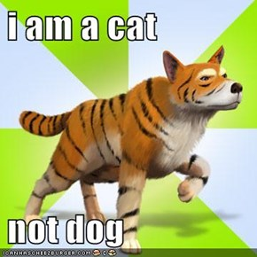 i am a cat  not dog