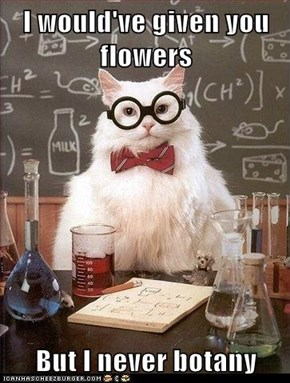 I would've given you flowers  But I never botany