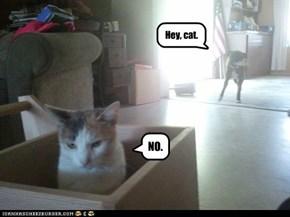 Hey, cat.