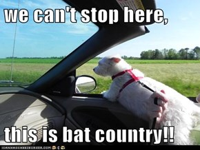we can't stop here,  this is bat country!!