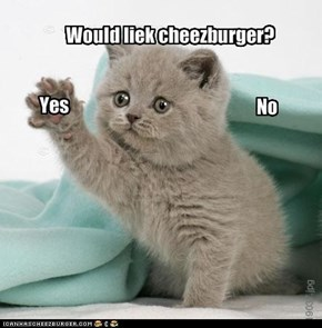 Cheezburger choice