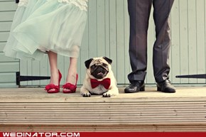 You Dapper Pug, You.