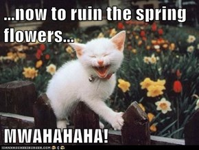 ...now to ruin the spring flowers...  MWAHAHAHA!