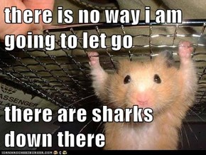 there is no way i am going to let go  there are sharks down there
