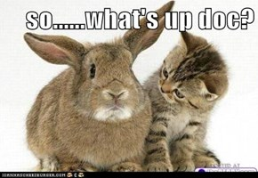 so......what's up doc?