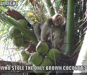 ALRIGHT  WHO STOLE THE ONLY BROWN COCONUT?