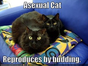 Asexual Cat  Reproduces by budding.