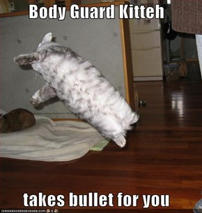 Body Guard Kitteh  takes bullet for you