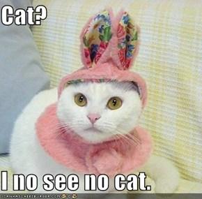 Cat?  I no see no cat.