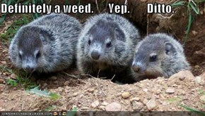 Definitely a weed.      Yep.       Ditto.