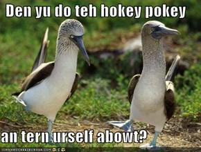 Den yu do teh hokey pokey  an tern urself abowt?