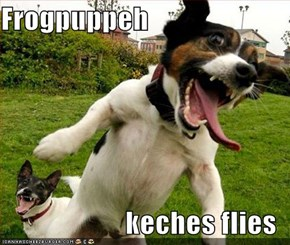 Frogpuppeh  keches flies