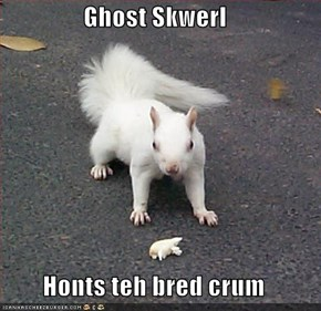 Ghost Skwerl  Honts teh bred crum
