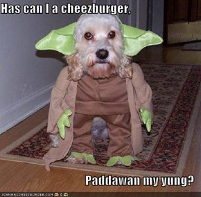Has can I a cheezburger,  Paddawan my yung?