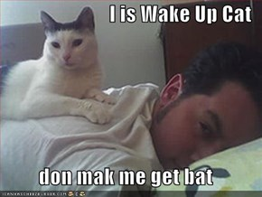 I is Wake Up Cat  don mak me get bat