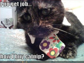 I no get job...  how I buy catnip?