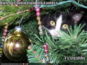 Kitteh is hidin from teh kamera  I's stealthy