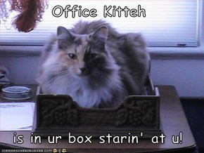 Office Kitteh  is in ur box starin' at u!