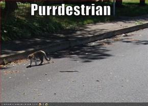 Purrdestrian