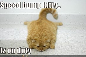 Speed bump kitty..  Iz on duty
