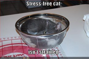 Stress-free cat  isn't strained