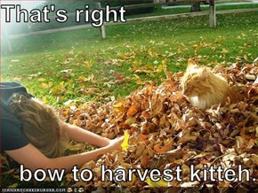That's right       bow to harvest kitteh.
