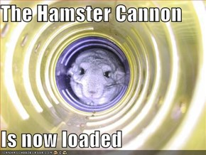 The Hamster Cannon  Is now loaded