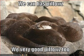 We can has pillowz  We very good pillowz too
