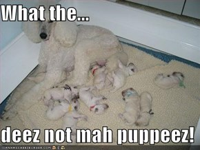 What the...  deez not mah puppeez!
