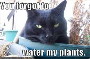 You forgot to   water my plants.