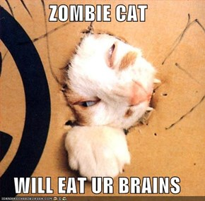 ZOMBIE CAT  WILL EAT UR BRAINS