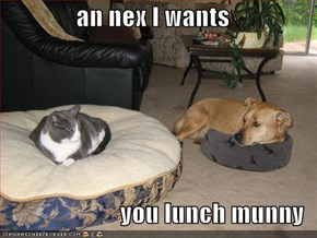 an nex I wants   you lunch munny