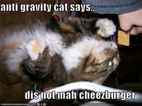 anti gravity cat says...  dis not mah cheezburger