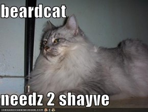 beardcat  needz 2 shayve
