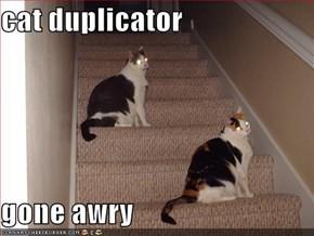 cat duplicator   gone awry