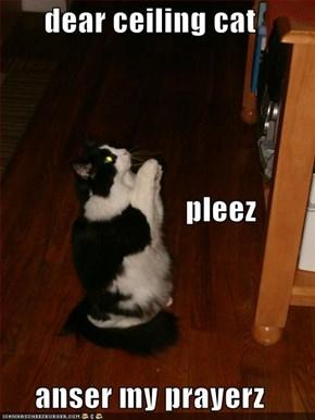 dear ceiling cat                        pleez anser my prayerz