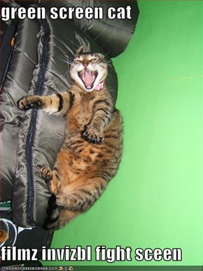 green screen cat  filmz invizbl fight sceen