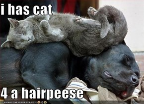 i has cat  4 a hairpeese