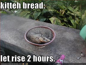 kitteh bread:  let rise 2 hours.