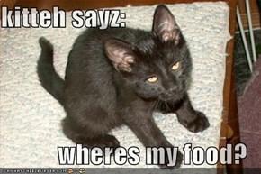 kitteh sayz:  wheres my food?