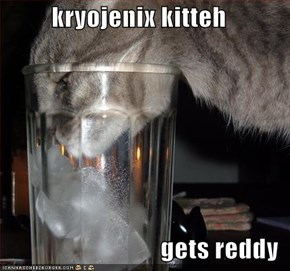 kryojenix kitteh  gets reddy