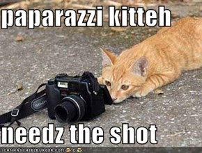 paparazzi kitteh  needz the shot