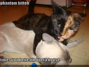 phantom kitteh  takes you beneath opera house